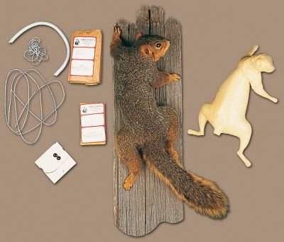 Climbing Add an interesting touch to any sportsman's room with the help of this kit. All materials are included along with full, detailed instructions.Available: Climbing Squirrel. - $39.88