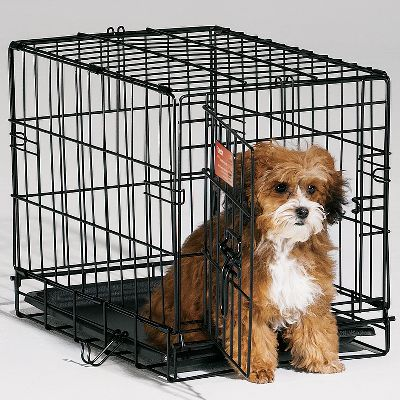Hunting Portable crates contain your dog without making him feel excluded from the fun. Divider lets you adjust the crate to your puppys size, cutting down on housetraining time by discouraging messes. The plastic pan provides a flat surface for a blanket or dog bed, and protects your floor should your dog make a mess. Crate folds flat for storage and has a carry handle for easy transportation. Frame is powder-coated for durability. One-year manufacturers limited warranty. Available: 18 - Fits dogs weighing 1-6 lbs. Dimensions: 18L x 12W x 14H. Weight: 8 lbs. 22 - Fits dogs weighing 1-12 lbs. Dimensions: 22L x 13W x 16H. Weight: 9 lbs. 24 - Fits dogs weighing 11-25 lbs. Dimensions: 24L x 18W x 19H. Weight: 14 lbs. 30 - Fits dogs weighing 26-40 lbs. Dimensions: 30L x 19W x 21H. Weight: 18 lbs. 36 - Fits dogs weighing 41-70 lbs. Dimensions: 36L x 23W x 25H. Weight: 22 lbs. 42 - Fits dogs weighing 71-90 lbs. Dimensions: 42L x 28W x 30H. Weight: 32 lbs. 48 - Fits dogs weighing 91-110 lbs. Dimensions: 48L x 30W x 33H. Weight: 40 lbs. Size: 18. Type: Pet Crates. - $24.99