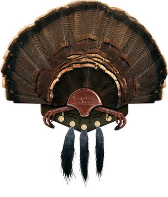 Hunting This easy, at-home turkey-mounting kit is made of high-quality materials for a professional-looking mount. Displays the fan and feet (optional). Five shotshell-shaped beard holders. - $37.88