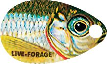 Fishing Live-Forage spinners use premium Mustad Ultra-Point hooks, durable 48 15-lb. Bionic Camo leaders, holographic beads and HD Fish-Photo-Image blades. High-definition blades deliver maximum flash and sonic vibrations. Single-hook model. Per each. Colors: (011)Silver Shiner, (012)Golden Shiner, (023)Yellow Perch, (024)Dace Chub. Color: Silver. Type: Bait Rigs. - $1.88