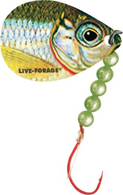 Fishing Live-Forage spinners use premium Mustad Ultra-Point hooks, durable 48 15-lb. Bionic Camo leaders, holographic beads and HD Fish-Photo-Image blades. The high-definition blades draw attention to your nightcrawler presentation. Dual-hook model. Per each. Colors: (011)Silver Shiner, (012)Golden Shiner, (023)Yellow Perch, (030)Emerald Shiner. Color: Silver. - $1.88