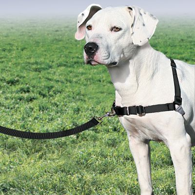 Hunting Discourages your dog from pulling while on a leash by steering him to the side and redirecting his attention toward you. A low-resting chest strap eliminates coughing, gagging and choking common with other harnesses. The soft, strong nylon harness has four adjustment points for a custom fit. Belly strap comes in a complementary color to ensure proper attachment. Imported. Sizes: Medium, Large. Size: LARGE. Type: Collars & Harnesses. - $19.99
