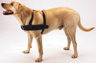 Hunting The Padded Pulling Harness is designed to fit the contour of a dog's neck and body. Allows your dog to work without binding or chafing. Sizes: M(40-60 lbs. )L(60-80 lbs.) XL(80-100 lbs.) 2XL(over 100 lbs.) - $52.99