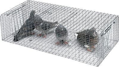 Hunting A one-way door at each end catches more pigeons. Rugged 16-gauge 1 x 1 galvanized wire construction. Holds 10 to 15 pigeons. Size: 30 x 15 x 8 . Type: Bird Training Accessories. - $64.99