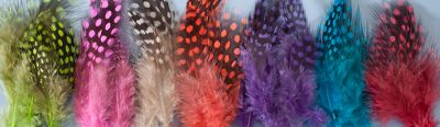 Flyfishing The bold, distinctive barring on these UV-enhanced guinea feathers makes them perfect for larger steelhead intruder and streamer patterns. 2-1/2 to 4 feathers. Premium quality subject to limited availability. Made in USA. Colors: (001)UV Hot Pink, (002)UV Chartreuse, (003)UV Blue, (005)UVPurple, (006)UVOrange. Color: Chartreuse. Type: Feathers. - $5.49