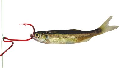Fishing This unique lever-action walleye hook enhances the tantalizing action of soft plastics or bait, making drop-shotting more effective than ever. Baits stay in upright position for better visibility. Sizes: 2 - Per 7 4 - Per 7 6 - Per 8 Color: Red. Size: 2. Color: Red. - $2.09