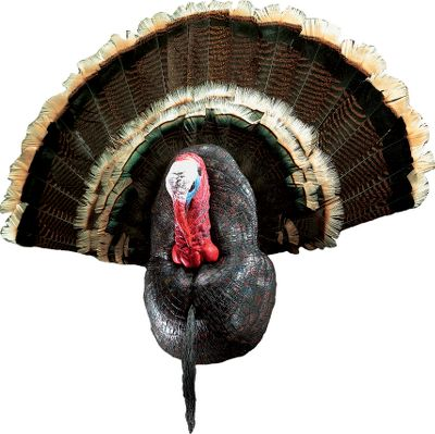 Hunting The easy and attractive way to mount your trophy gobbler. These do-it-yourself kits will accept any turkey fan mount and beard and are individually hand-painted for exceptional artistic style and natural realism. Includes hanger. Reproduction gobbler head and breast are individually hand-painted for exceptional artistic style and natural realism. Includes large tail holder, painted turkey head with eyes, painted turkey breast, preservative and hardware. Measures: 14-1/2H x 9-1/2W x 5D - $59.88