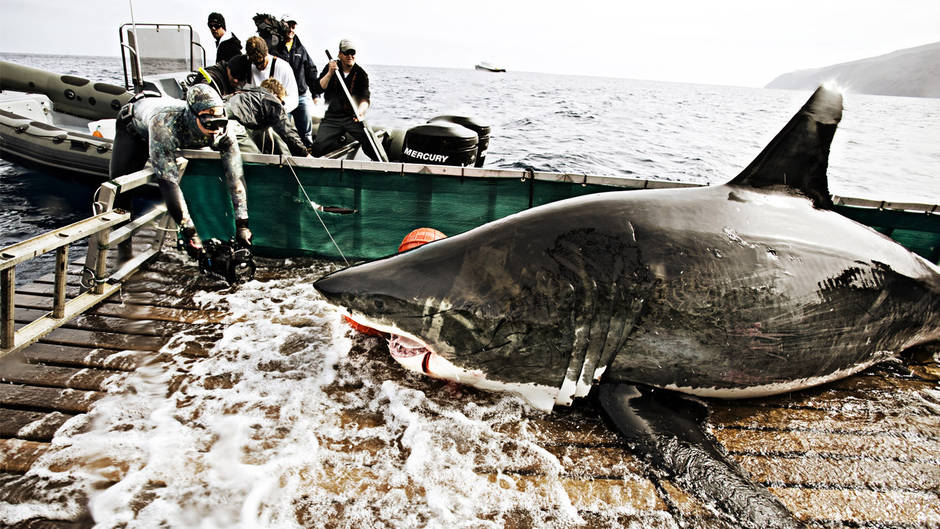 Fishing The Shark Men catch & release Great Whites... Incredible!