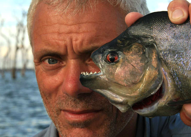 Fishing Jeremy Wade with a 1-pound black piranha, the largest of the roughly 40-known piranha species