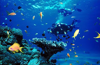 Scuba The undersea beauty awaiting just off the coast of Eilat in the Red Sea""