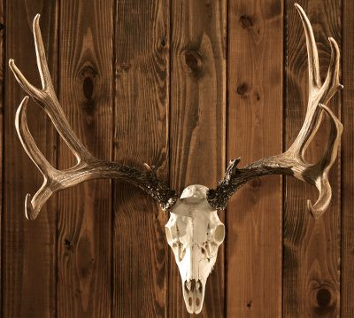 Camp and Hike Enjoy bringing the spirit of the woods to your home, camp or cabin without the cost of taxidermy and expensive trophy hunts. These full-size European reproduction mounts are authentic in look, feel and awe-inspiring presence. Both the Whitetail and Mule Deer are 24 W x 24 H. Each of these trophy-class reproduction mounts is crafted to hang indoors or outdoors and comes with detachable antlers for easy hanging. All mounting hardware is included. Some assembly is required. Available: Whitetail, Mule Deer. - $199.99