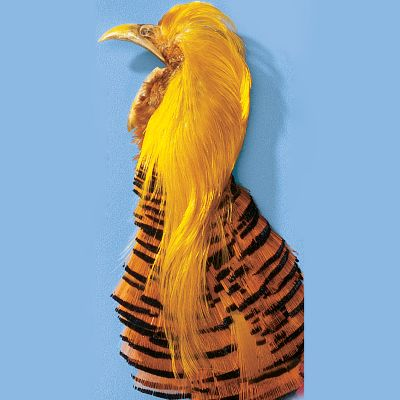 Flyfishing The Golden Pheasant head and crest is great for tying tails on attractor patterns. It is particularly effective with trudes and coachmans. - $9.99
